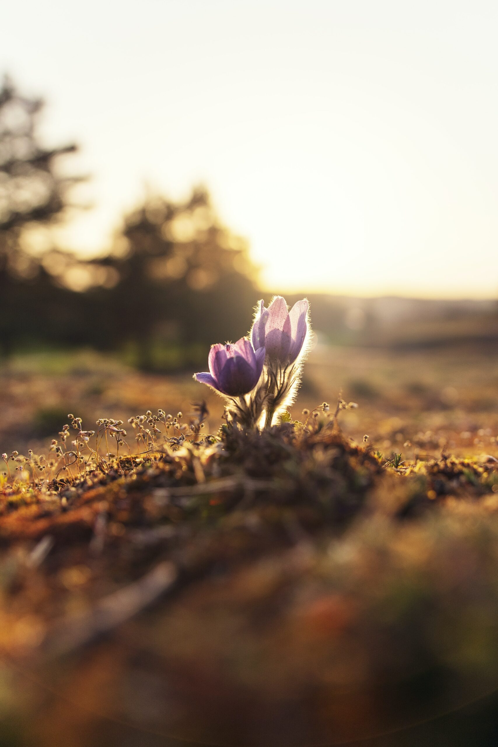 growing flower